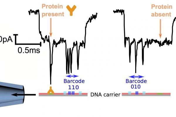 DNAbarcodes